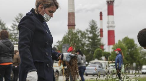 В Первоуральске высадят две тысячи дубов