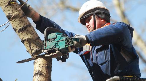 В Первоуральске продолжат кронировать деревья