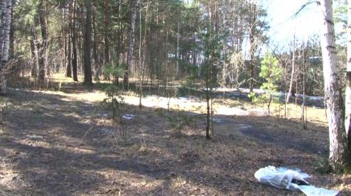 В Первоуральске обнаружили очередной труп собаки