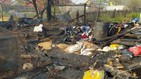 Под Первоуральском сожгли приют для животных, погибло более 30 собак