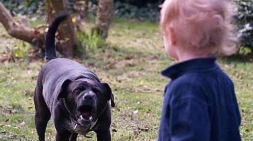 Полиция Первоуральска не стала наказывать хозяйку агрессивной собаки, напавшей на подростков