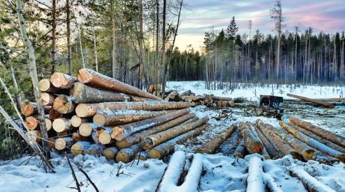 400 тысяч кубов леса ежегодно вырубают в Первоуральске