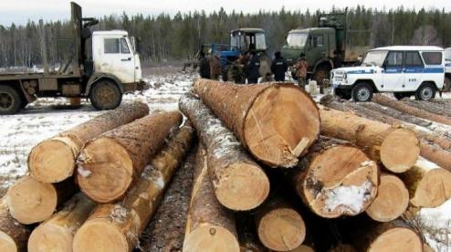 антирейтинг по незаконной вырубке леса